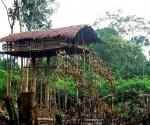 Дом на дереве. Папуа-Новая Гвинея