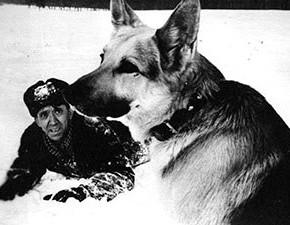 dog-ice